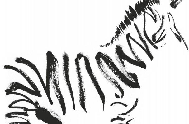 find a zebra